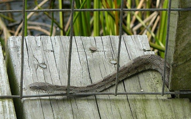 Snake proof fences help control snakes on properties
