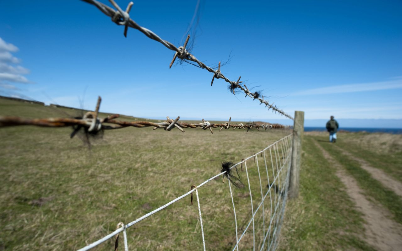 Barbed Wire Fence Alongside Country Road